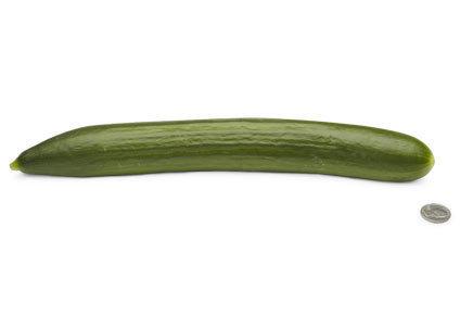 26-english-cucumber